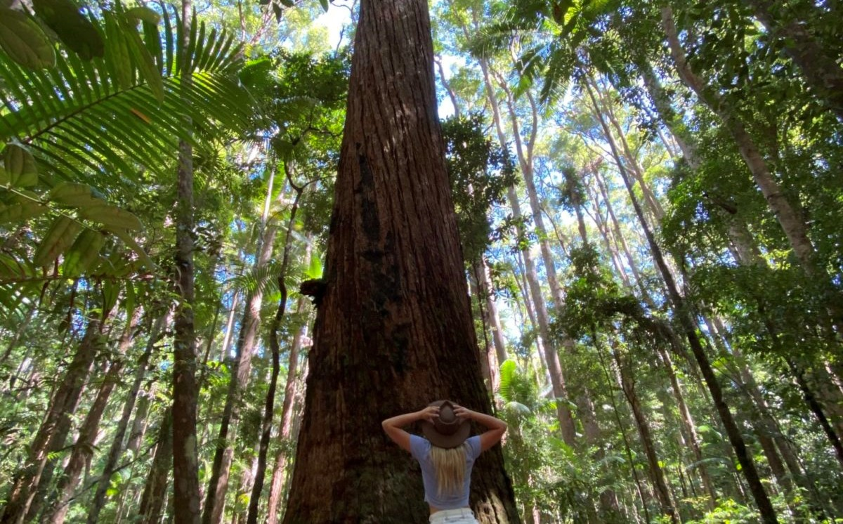 Fraser Island Tours - women looking up a tall tree